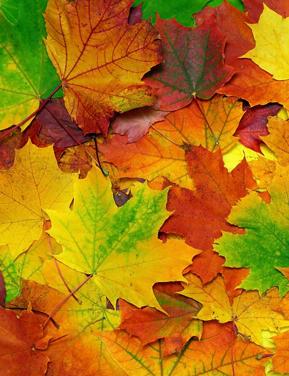 Autumn Leaf Festival